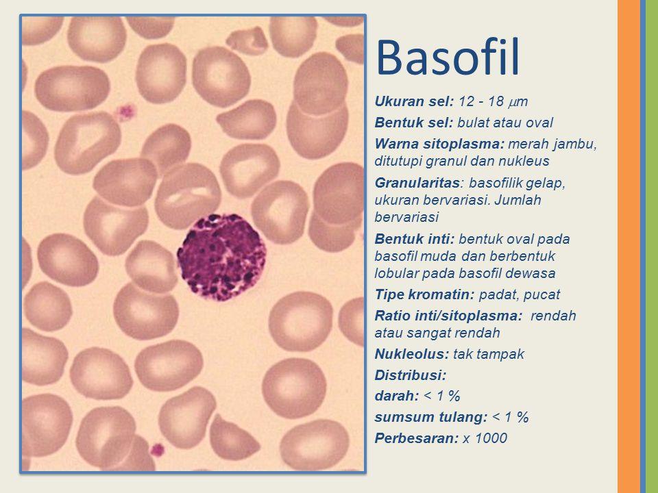 Basofil Ukuran sel: 12 - 18 m Bentuk sel: bulat atau oval