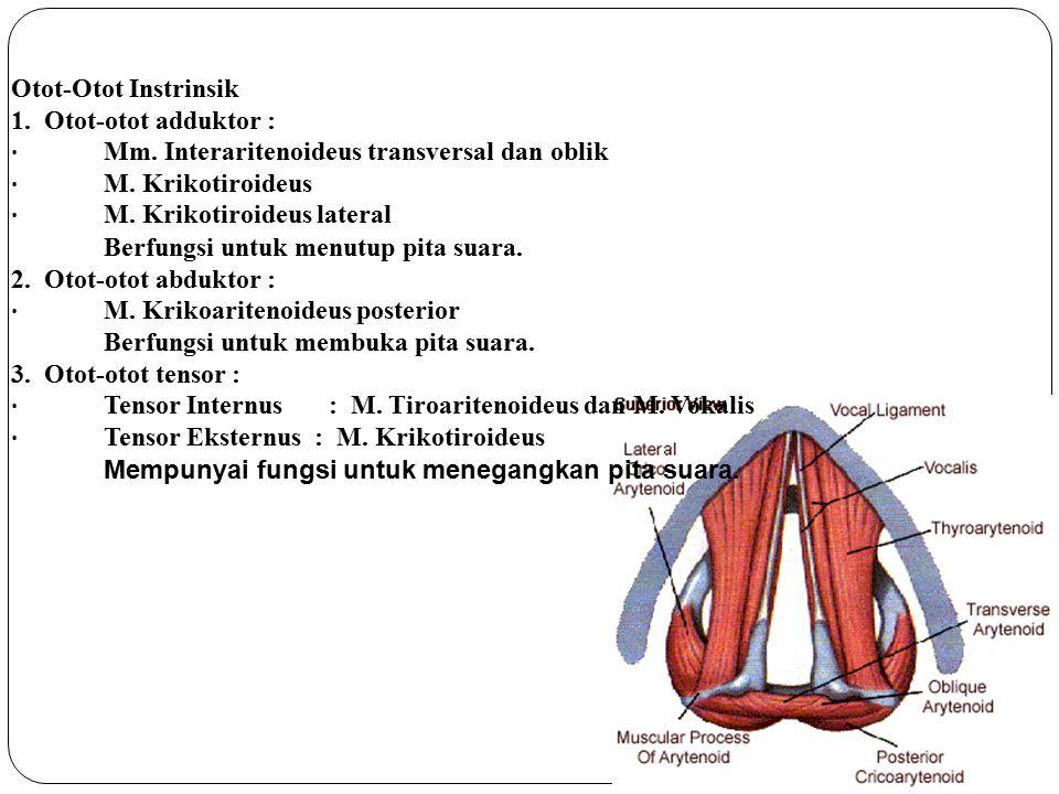 Otot-Otot Instrinsik 1. Otot-otot adduktor : · Mm. Interaritenoideus transversal dan oblik. · M. Krikotiroideus.
