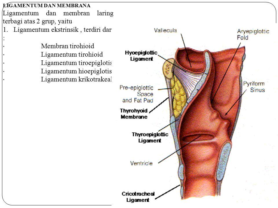 Ligamentum dan membran laring terbagi atas 2 grup, yaitu