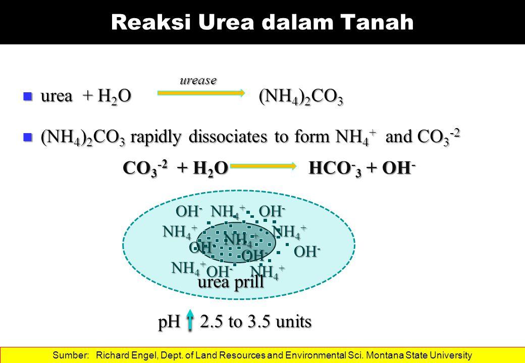 Reaksi Urea dalam Tanah