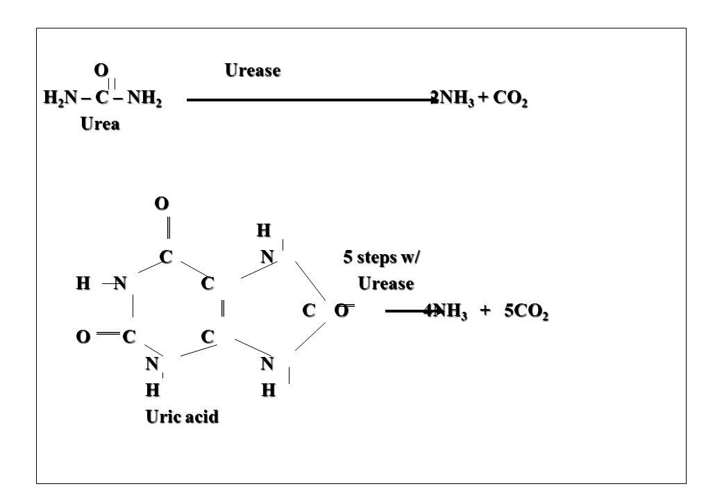 O Urease H2N – C – NH2 2NH3 + CO2.