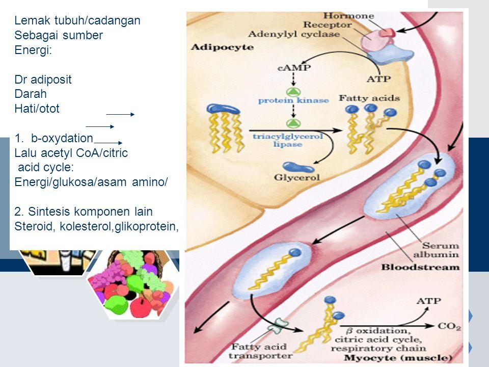 Lemak tubuh/cadangan Sebagai sumber. Energi: Dr adiposit. Darah. Hati/otot. 1. b-oxydation. Lalu acetyl CoA/citric.