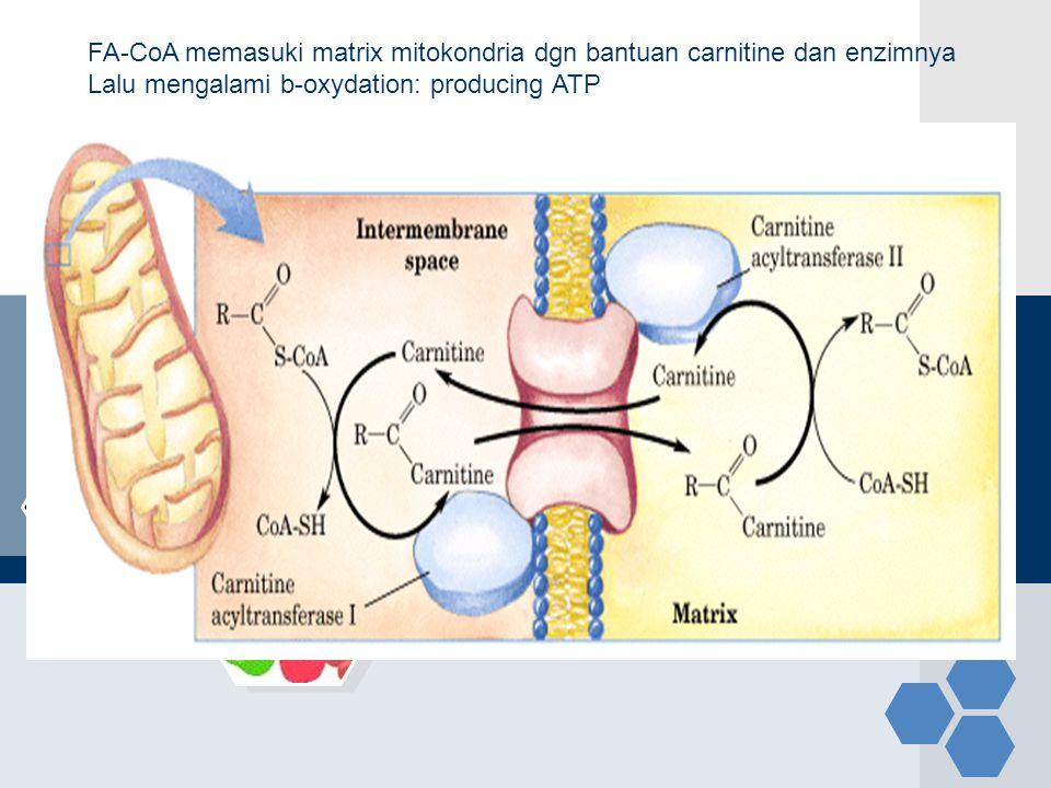FA-CoA memasuki matrix mitokondria dgn bantuan carnitine dan enzimnya