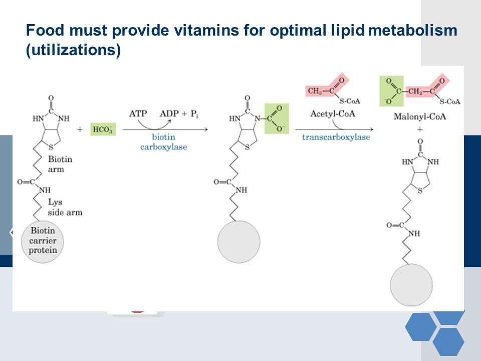 Food must provide vitamins for optimal lipid metabolism