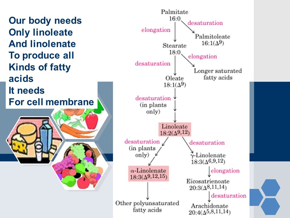 Our body needs Only linoleate. And linolenate. To produce all. Kinds of fatty. acids. It needs.