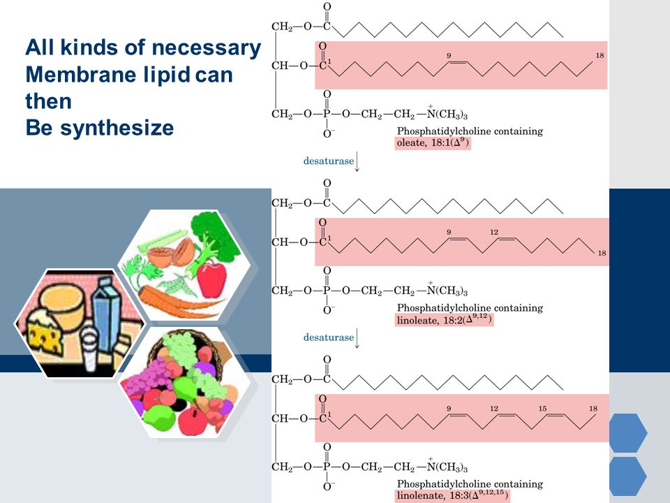 All kinds of necessary Membrane lipid can then Be synthesize