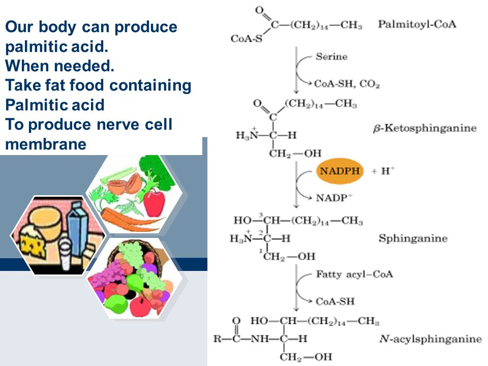 Our body can produce palmitic acid. When needed. Take fat food containing. Palmitic acid. To produce nerve cell.