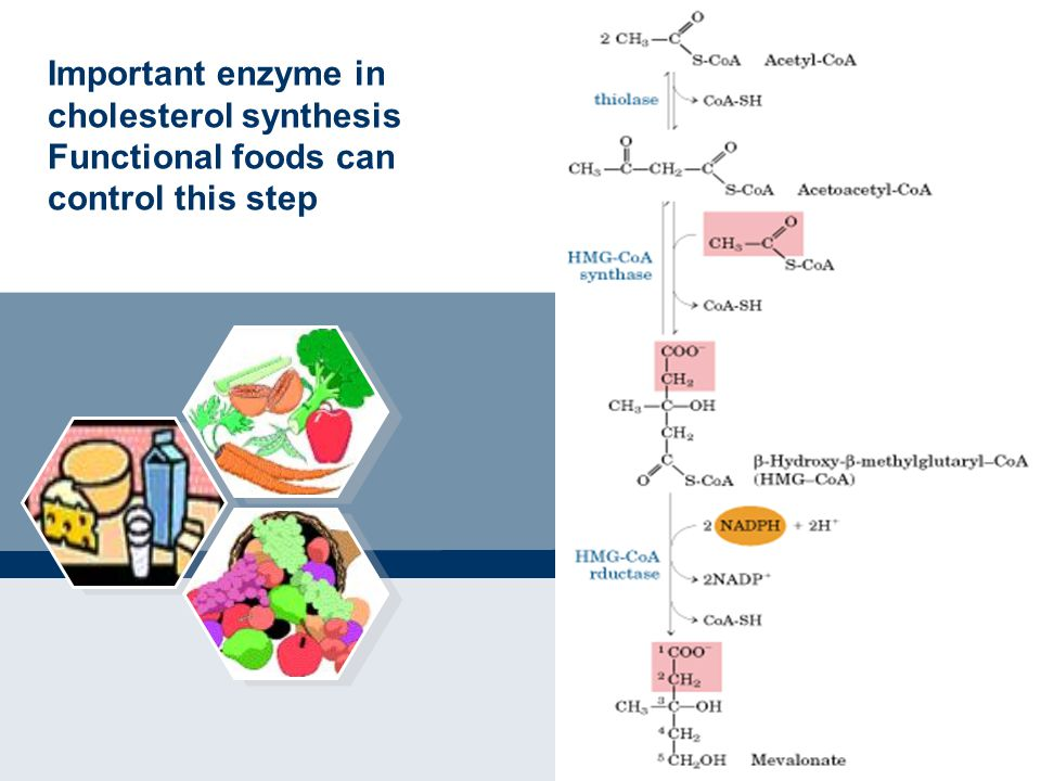 Important enzyme in cholesterol synthesis Functional foods can control this step
