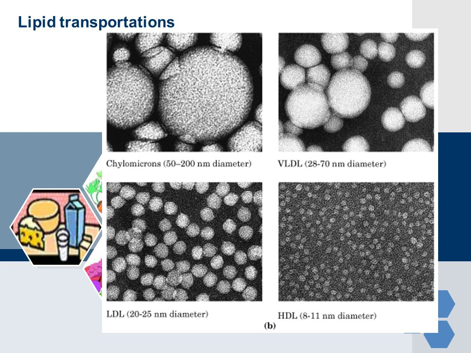 Lipid transportations