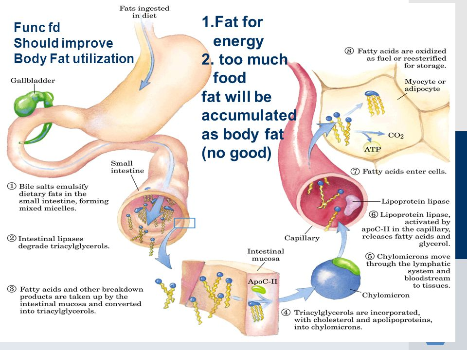 Fat for energy too much food fat will be accumulated as body fat