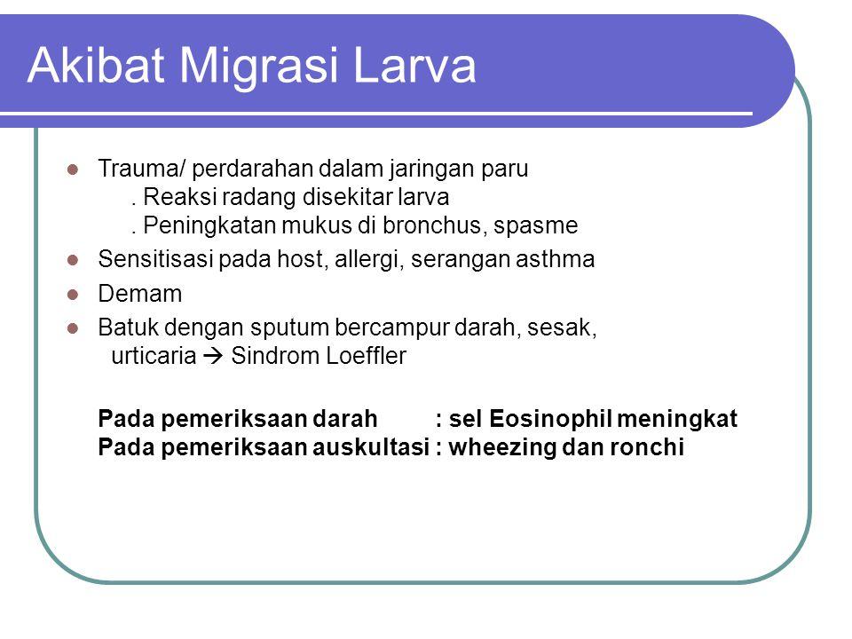 Akibat Migrasi Larva Trauma/ perdarahan dalam jaringan paru . Reaksi radang disekitar larva . Peningkatan mukus di bronchus, spasme.