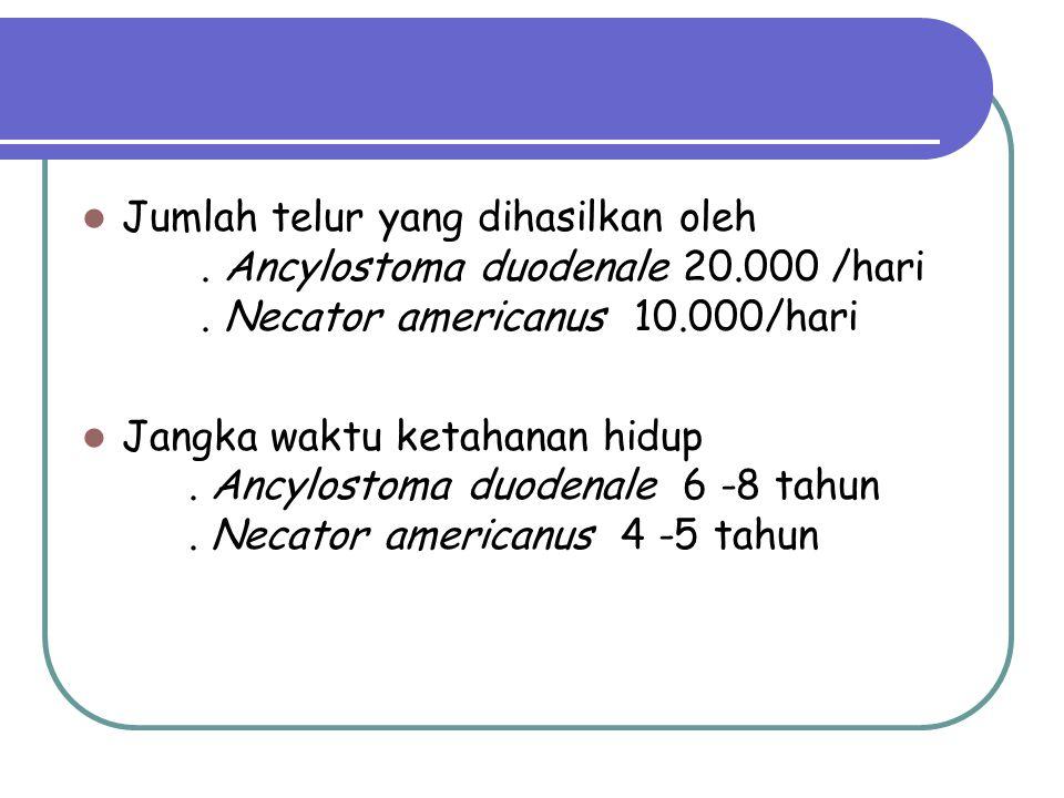 Jumlah telur yang dihasilkan oleh. Ancylostoma duodenale 20. 000 /hari