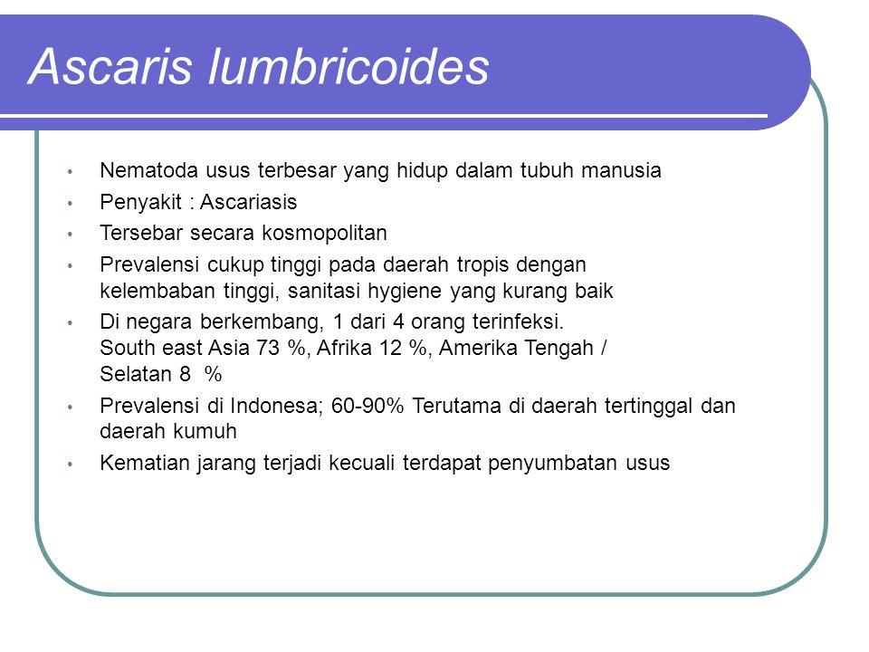 Ascaris lumbricoides Nematoda usus terbesar yang hidup dalam tubuh manusia. Penyakit : Ascariasis.