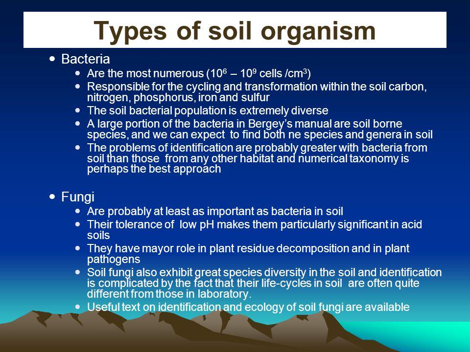 Types of soil organism Bacteria Fungi