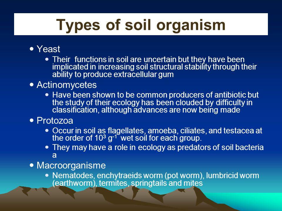 Types of soil organism Yeast Actinomycetes Protozoa Macroorganisme