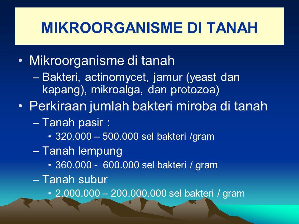 MIKROORGANISME DI TANAH