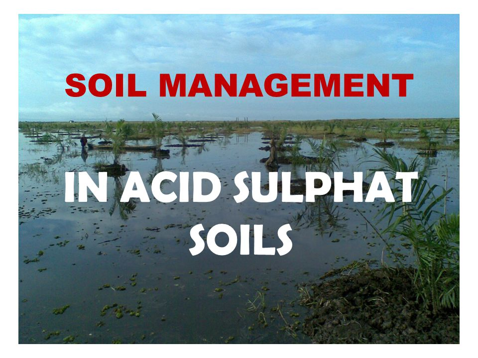 SOIL MANAGEMENT IN ACID SULPHAT SOILS
