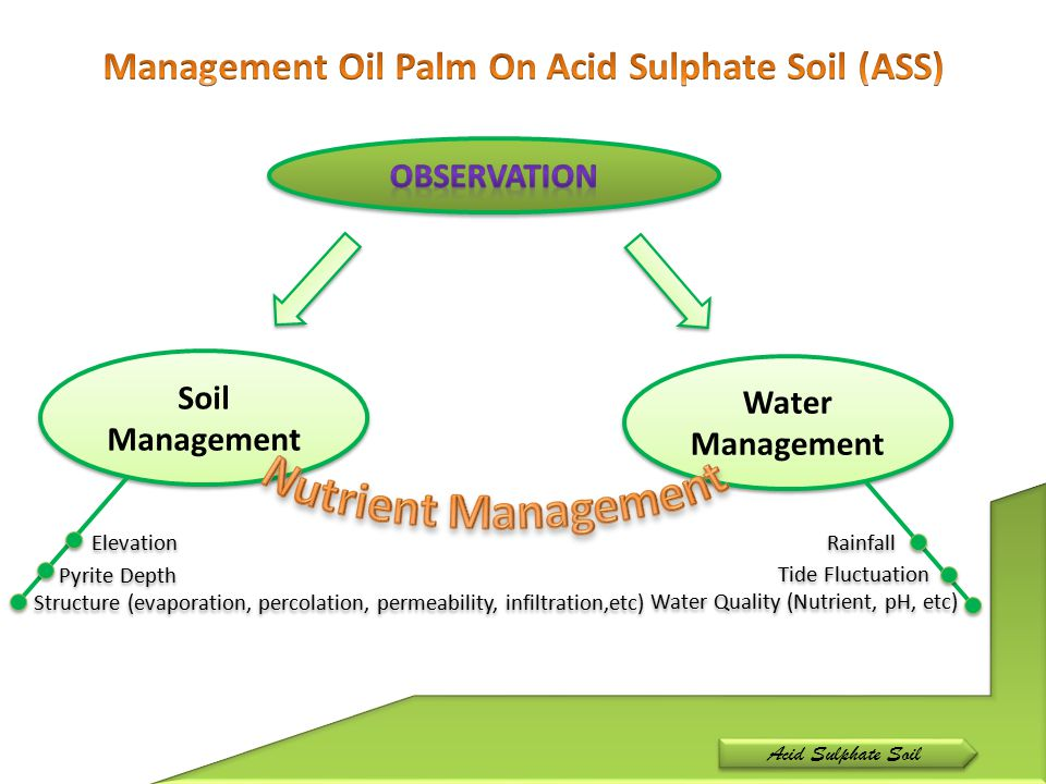 Management Oil Palm On Acid Sulphate Soil (ASS)
