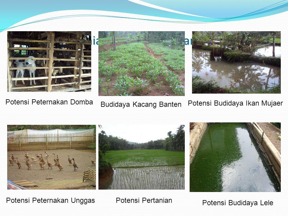 Potensi Pertanian, Peternakan dan Perikanan