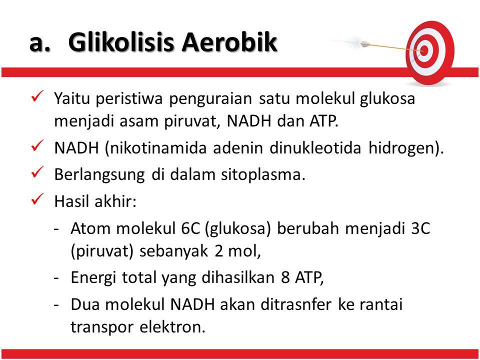 a. Glikolisis Aerobik Yaitu peristiwa penguraian satu molekul glukosa menjadi asam piruvat, NADH dan ATP.