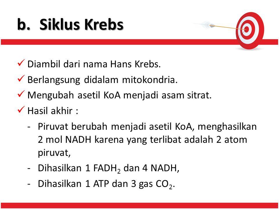 b. Siklus Krebs Diambil dari nama Hans Krebs.