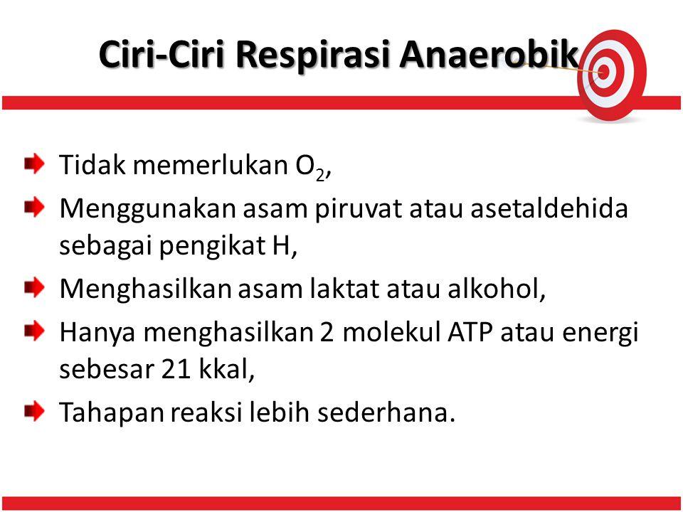 Ciri-Ciri Respirasi Anaerobik