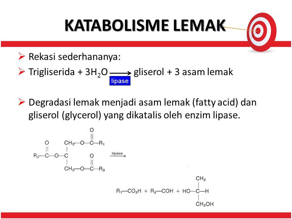 KATABOLISME LEMAK Rekasi sederhananya: