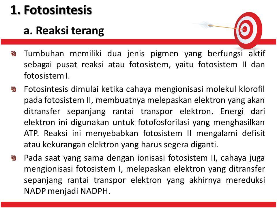 1. Fotosintesis a. Reaksi terang