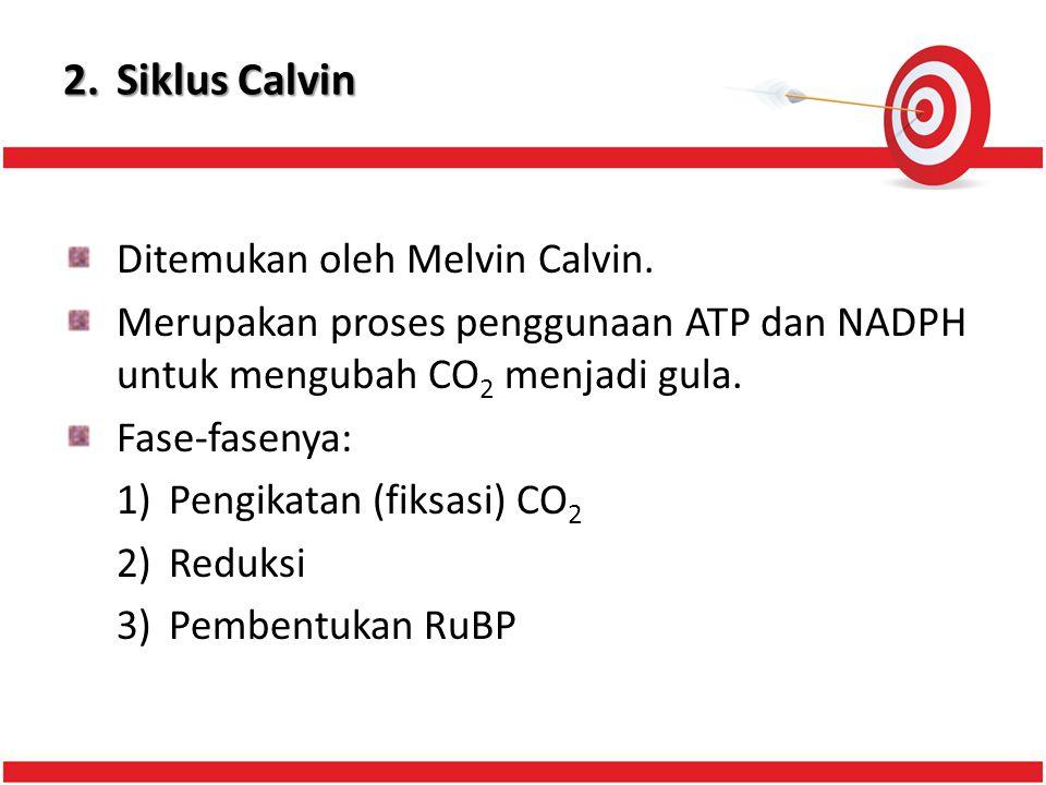 2. Siklus Calvin Ditemukan oleh Melvin Calvin.