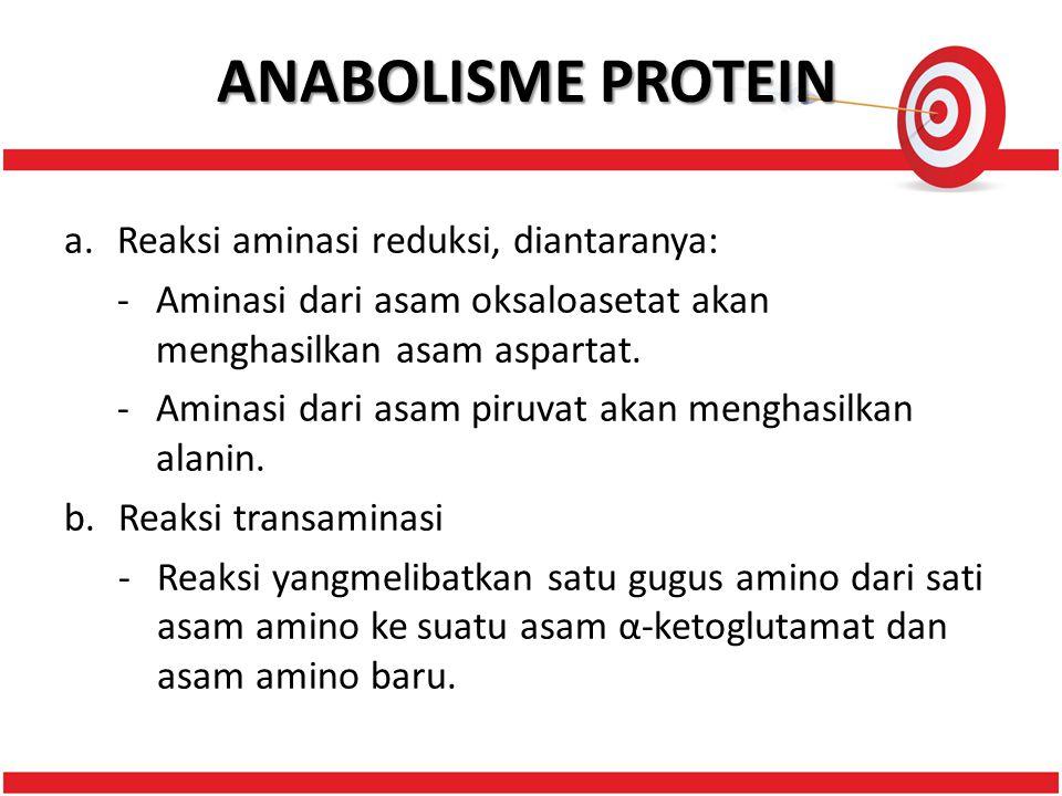 ANABOLISME PROTEIN Reaksi aminasi reduksi, diantaranya: