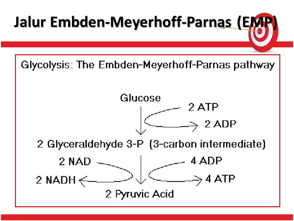 Jalur Embden-Meyerhoff-Parnas (EMP)