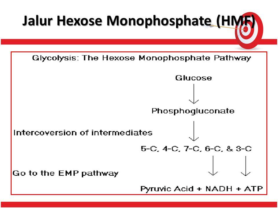 Jalur Hexose Monophosphate (HMF)