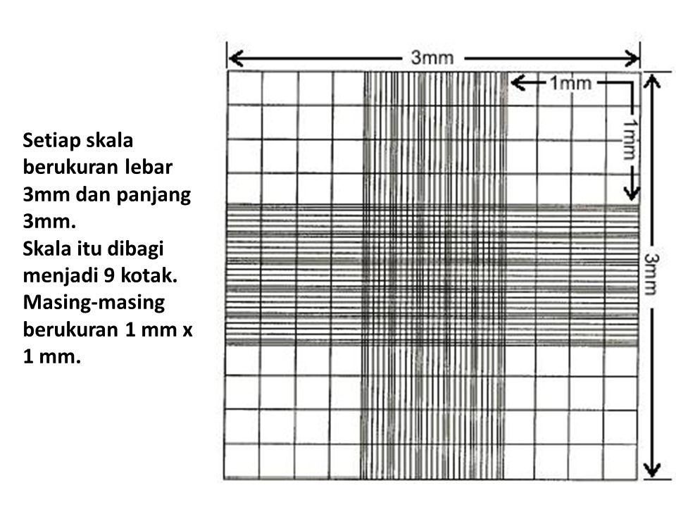 Setiap skala berukuran lebar 3mm dan panjang 3mm