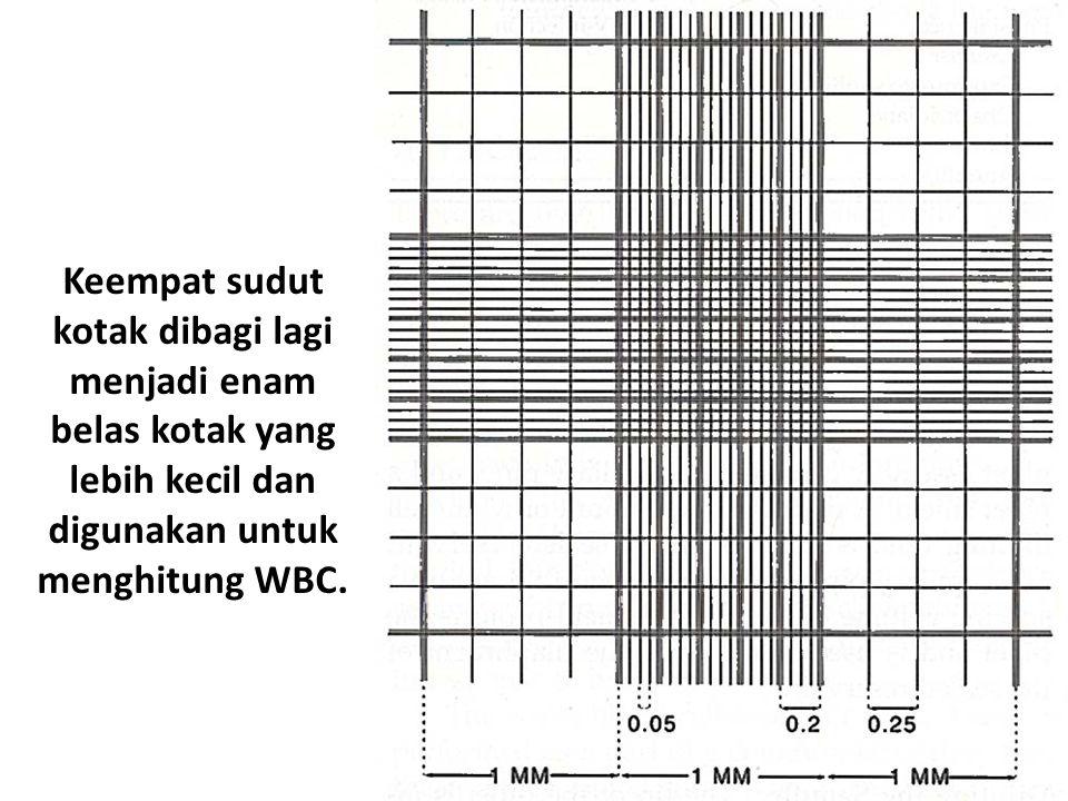 Keempat sudut kotak dibagi lagi menjadi enam belas kotak yang lebih kecil dan digunakan untuk menghitung WBC.