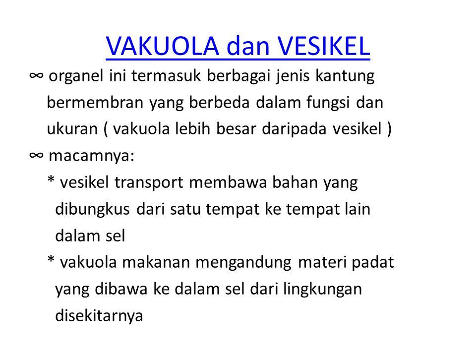 VAKUOLA dan VESIKEL ∞ organel ini termasuk berbagai jenis kantung