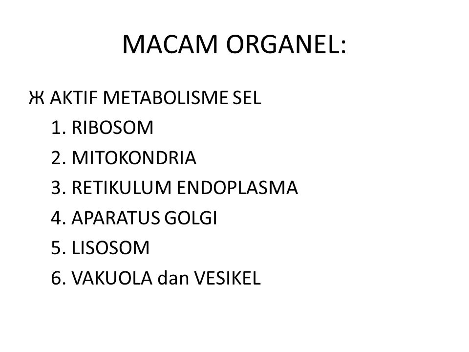 MACAM ORGANEL: Ж AKTIF METABOLISME SEL 1. RIBOSOM 2. MITOKONDRIA