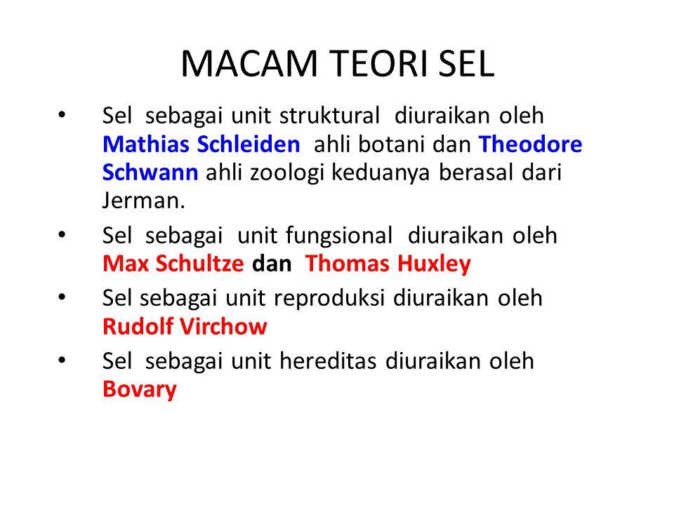 MACAM TEORI SEL