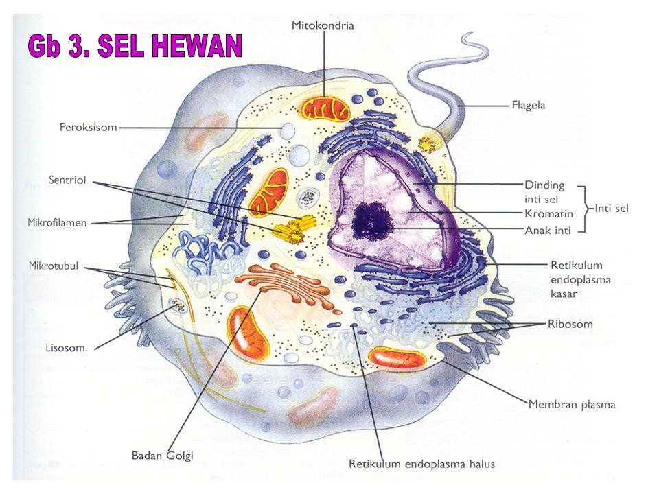 Gb 3. SEL HEWAN