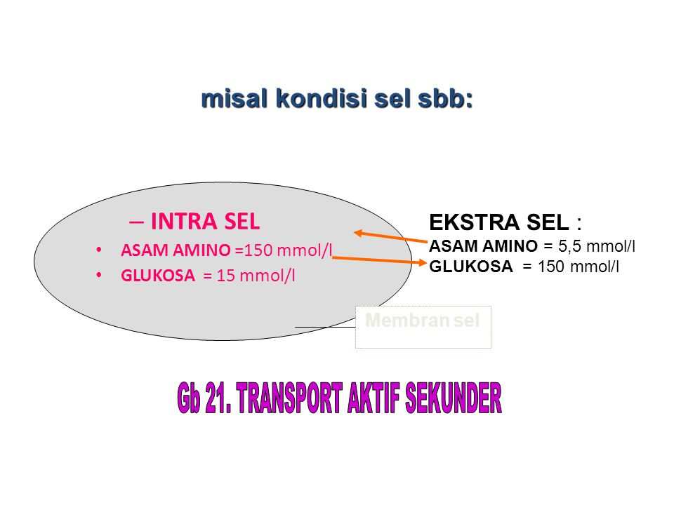 Gb 21. TRANSPORT AKTIF SEKUNDER