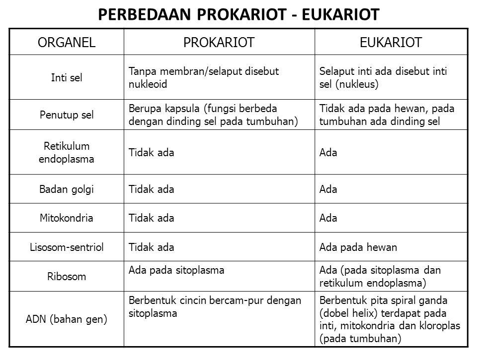 PERBEDAAN PROKARIOT - EUKARIOT
