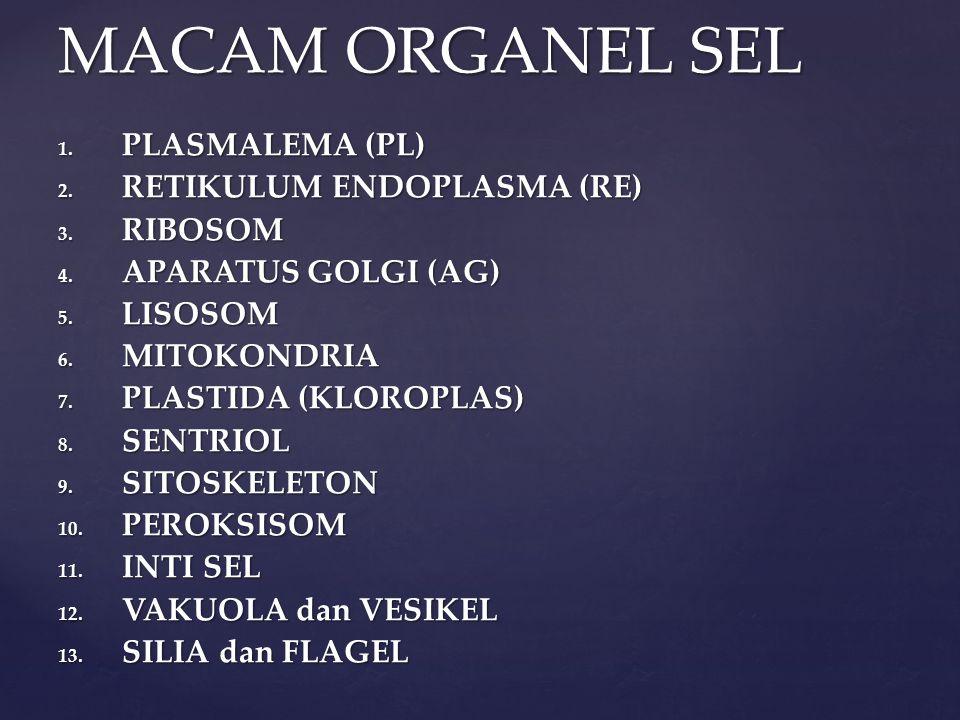 MACAM ORGANEL SEL PLASMALEMA (PL) RETIKULUM ENDOPLASMA (RE) RIBOSOM