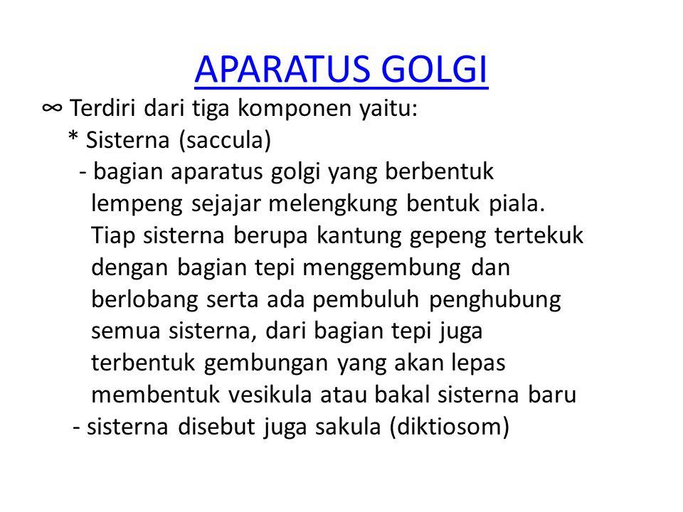 APARATUS GOLGI ∞ Terdiri dari tiga komponen yaitu: