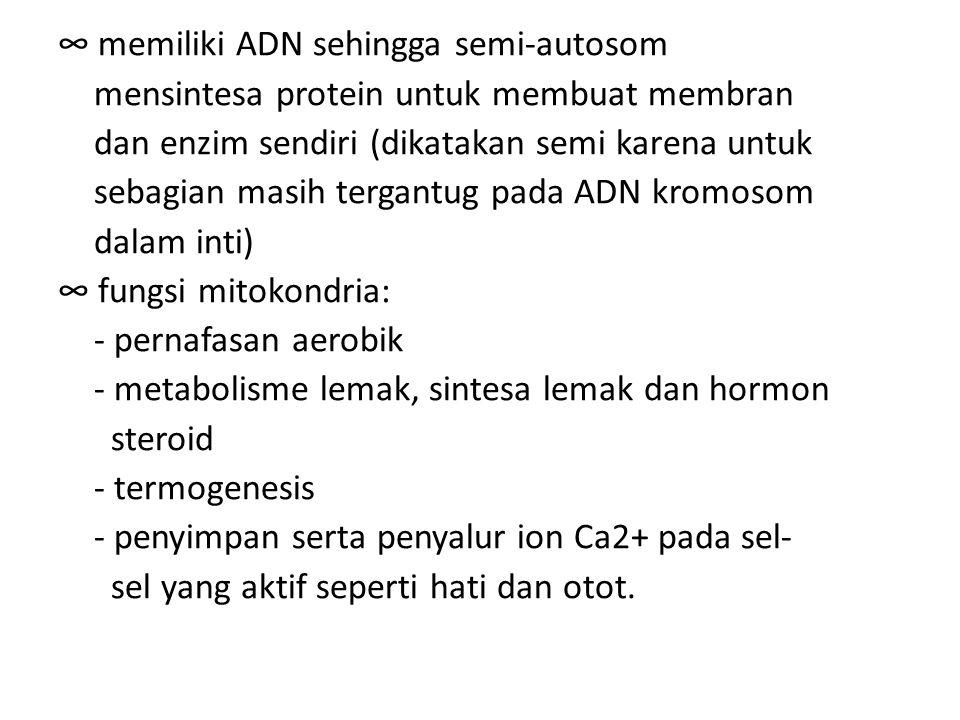 ∞ memiliki ADN sehingga semi-autosom