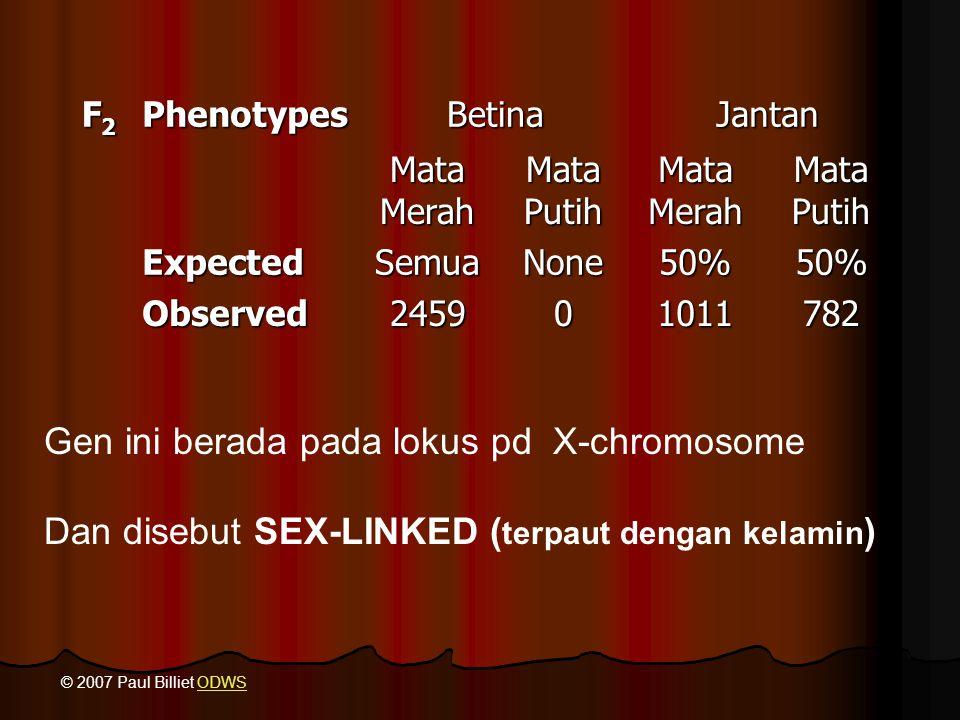 Gen ini berada pada lokus pd X-chromosome