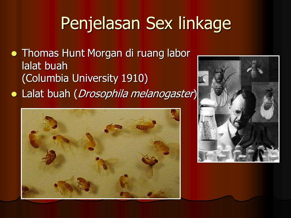 Penjelasan Sex linkage