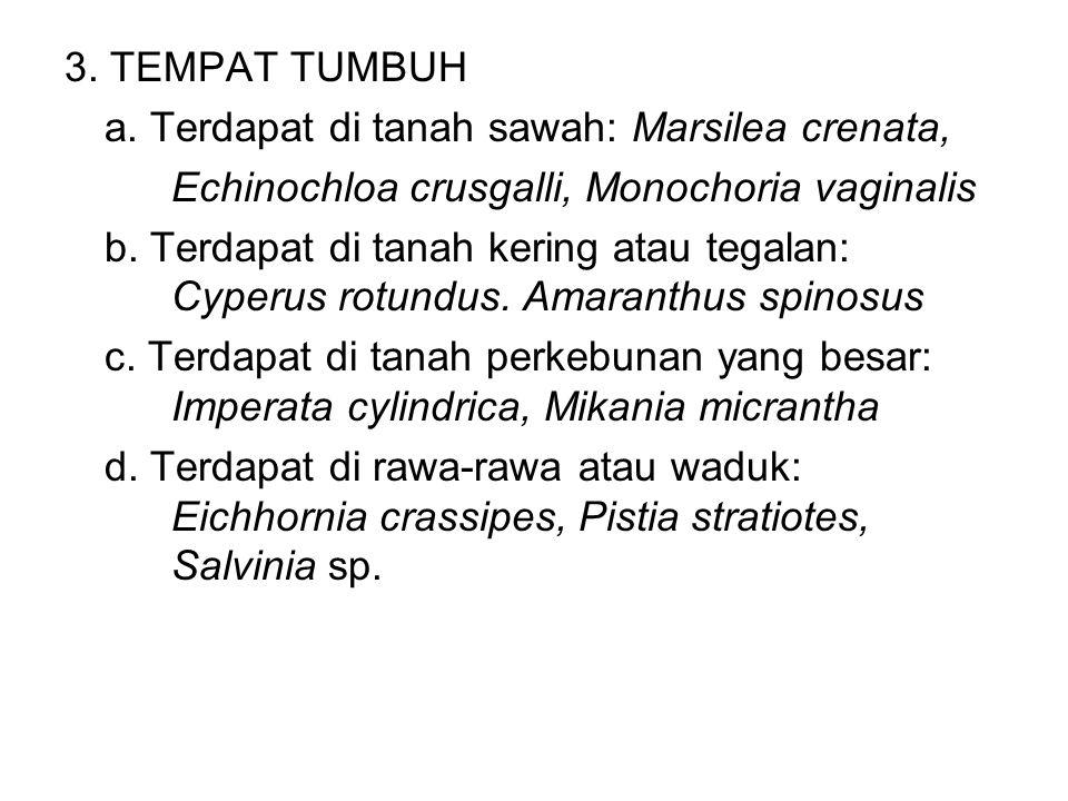 3. TEMPAT TUMBUH a. Terdapat di tanah sawah: Marsilea crenata, Echinochloa crusgalli, Monochoria vaginalis.