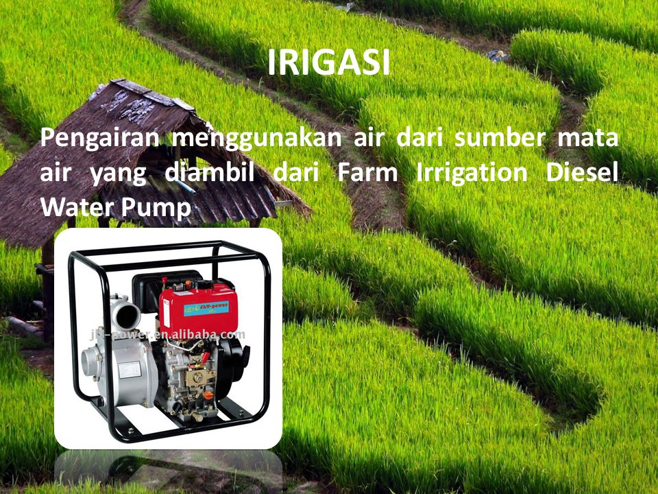 IRIGASI Pengairan menggunakan air dari sumber mata air yang diambil dari Farm Irrigation Diesel Water Pump.