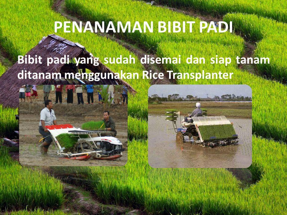 PENANAMAN BIBIT PADI Bibit padi yang sudah disemai dan siap tanam ditanam menggunakan Rice Transplanter.