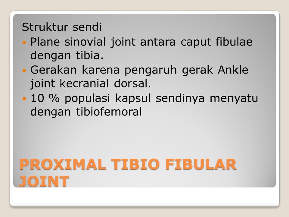 PROXIMAL TIBIO FIBULAR JOINT