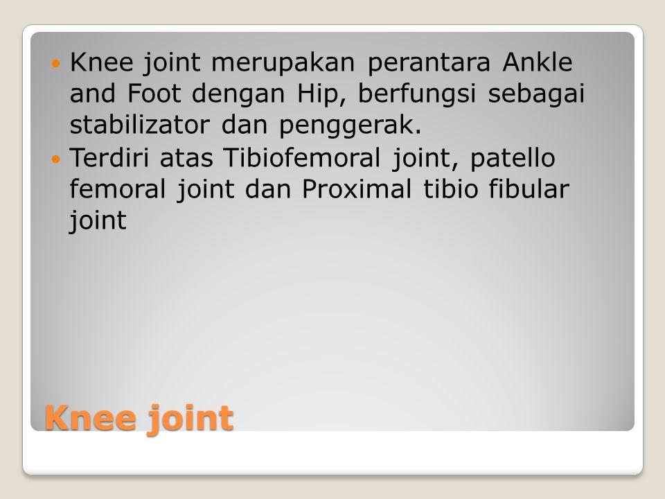 Knee joint merupakan perantara Ankle and Foot dengan Hip, berfungsi sebagai stabilizator dan penggerak.